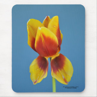 Yellow and Orange single tulip. Mouse Pad