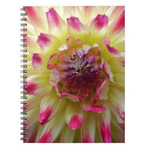Yellow and pink Dahlia Note Book