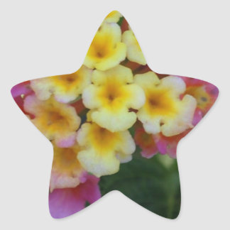 Yellow and Pink Flowers Star Sticker