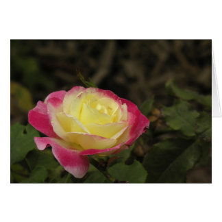 Yellow and Pink Rose Card