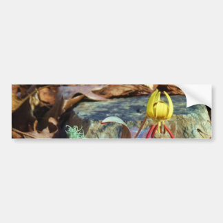 Yellow and Plum Trout Lily and Snail Shell Bumper Sticker