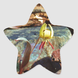 Yellow and Plum Trout Lily and Snail Shell Star Sticker