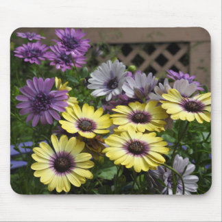 Yellow and Purple African Daisies Mouse Pad