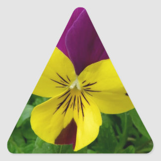 Yellow and Purple Viola (pansy) Flower Triangle Sticker