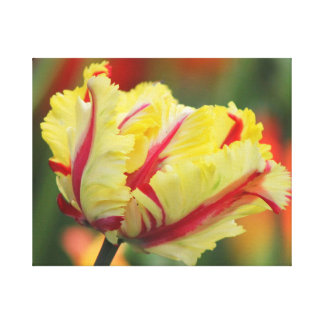 Yellow and Red Spring Tulip Canvas Wall Print