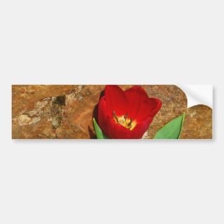 Yellow and Red Tulip Bumper Stickers