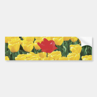 Yellow and red tulips bumper sticker