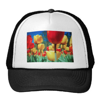 yellow and red tulips hats