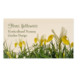 Yellow and white iris bucharica pack of standard business cards