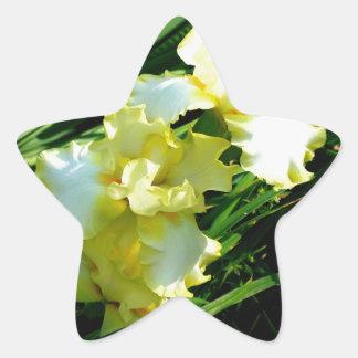 Yellow and White Iris Flower Star Sticker