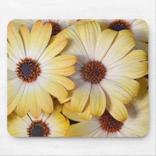 Yellow and white osteospermum flowers mouse pads