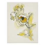 Yellow and White Roses Poster