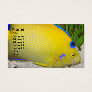 Yellow Angelfish Photo