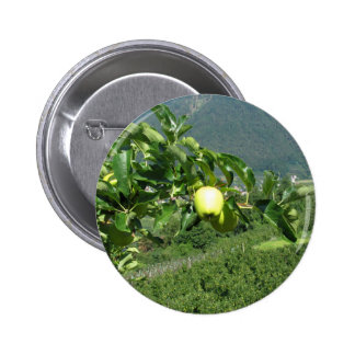 Yellow apples on tree branches pinback button
