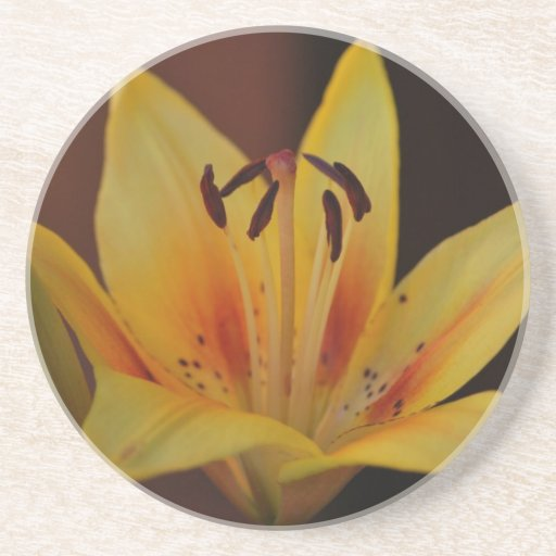 Yellow Asiatic Lily Coaster