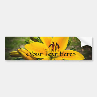 Yellow Asiatic Lily in Bloom Bumper Sticker