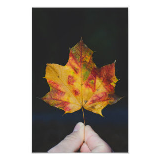 Yellow autumn leaf macro photographic print