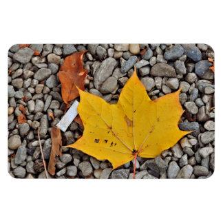 Yellow autumn leaf rectangular photo magnet