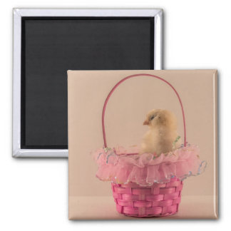Yellow Baby Chick in Pretty Pink Basket Refrigerator Magnets