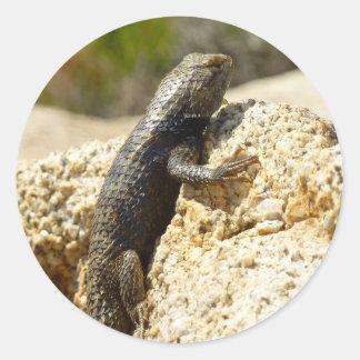 Yellow-Backed Spiny Lizard at Joshua Tree Classic Round Sticker