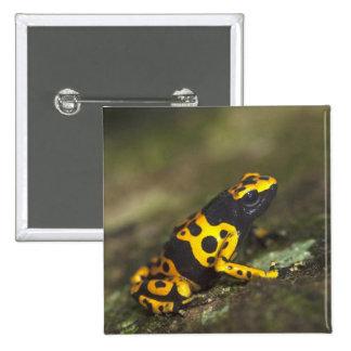 Yellow-banded Poison Dart Frog Dendrobates 15 Cm Square Badge