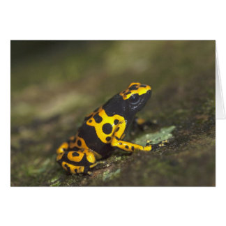 Yellow-banded Poison Dart Frog Dendrobates Card