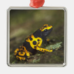 Yellow-banded Poison Dart Frog Dendrobates Silver-Colored Square Decoration