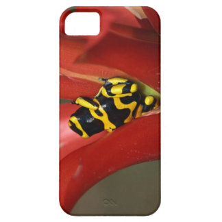 Yellow-banded poison frog iPhone 5 covers