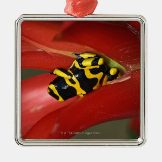 Yellow-banded poison frog Silver-Colored square decoration