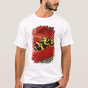 Sitting Frog T-Shirts & Shirt Designs | Zazzle UK