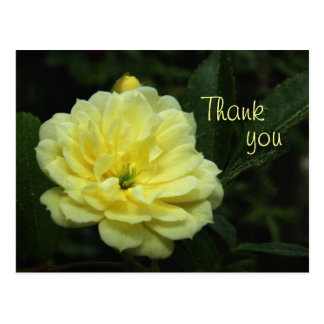 Yellow Banksia Rose Thank You Postcard