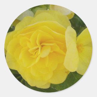 Yellow Begonia Stickers