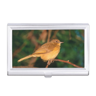 Yellow-Bellied Greenbul Business Card Holder