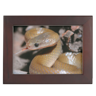 Yellow Bellied House Snake (Lamprophis Fuscus) Keepsake Box