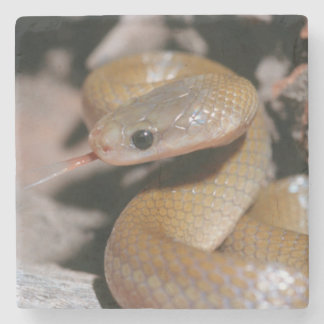 Yellow Bellied House Snake (Lamprophis Fuscus) Stone Coaster