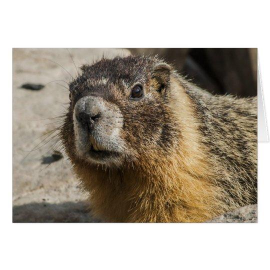 Yellow Bellied Marmot Card