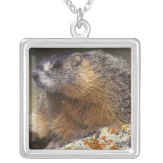 Yellow-bellied Marmot, Yellowstone NP, WY, USA Silver Plated Necklace