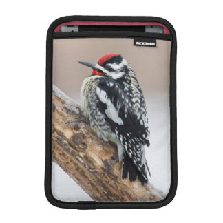 Yellow-bellied Sapsucker male iPad Mini Sleeve