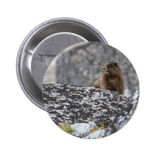 Yellow Belly Marmot Pinback Buttons