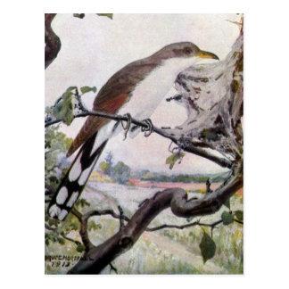 Yellow-billed Cuckoo and Tent Caterpillars Postcard