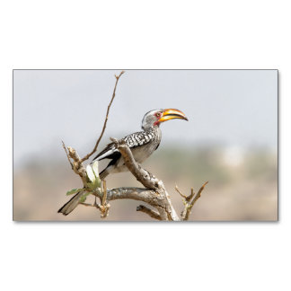 Yellow billed hornbill magnetic business cards