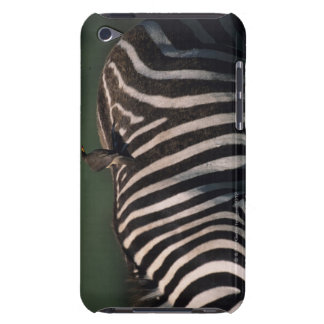 Yellow-billed oxpecker (Buphagus africanus) Barely There iPod Cases
