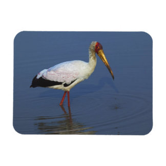 Yellow-billed Stork, Masai Mara, Kenya Rectangular Photo Magnet