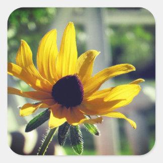 Yellow Black-eyed Susan Wildflower Square Sticker