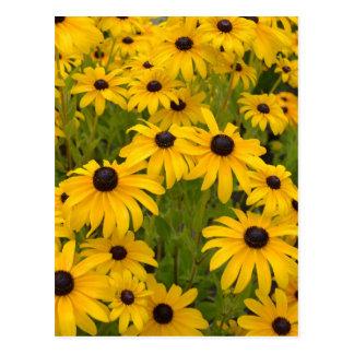 Yellow Black Eyed Susans Post Card