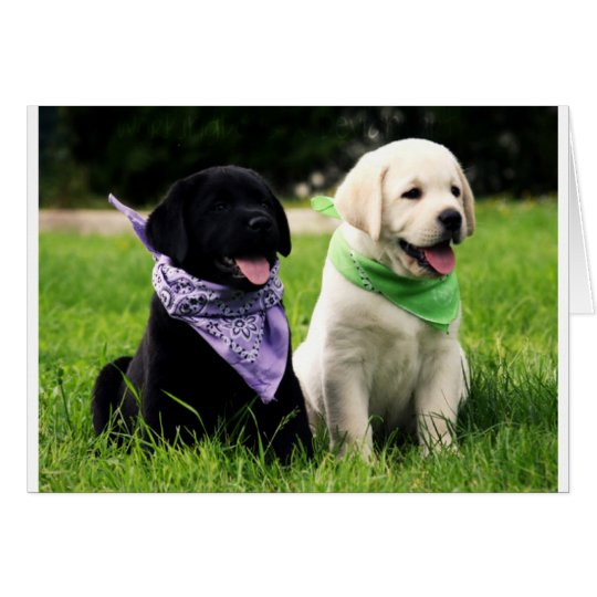 Yellow & Black Labrador Retriever Puppy Note Card