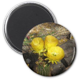 Yellow Blooming Cactus Trio 6 Cm Round Magnet