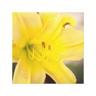 Yellow Blooming Flower Nature Floral Fine Art Gallery Wrapped Canvas