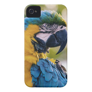 Yellow Blue Macaw Parrot Case-Mate iPhone 4 Cases