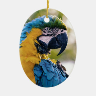 Yellow Blue Macaw Parrot Ceramic Oval Decoration